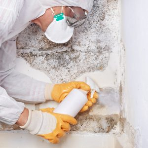 Mold Damage Restoration | Inland Empire | Paul Davis